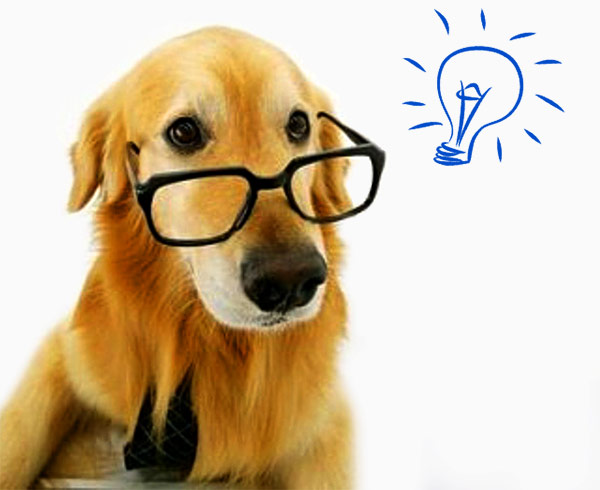 A learned dog with ideas!