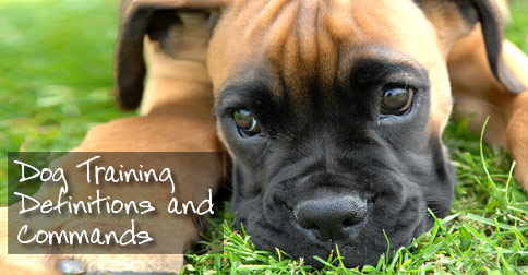 Dog Training Definitions and Commands