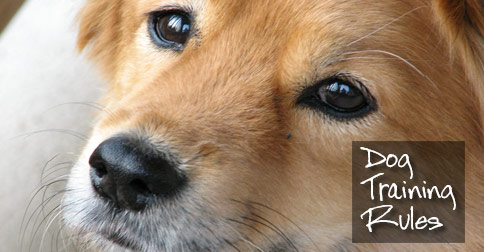 Dog Training Rules photo