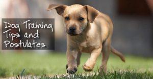Dog Training Tips and Postulates