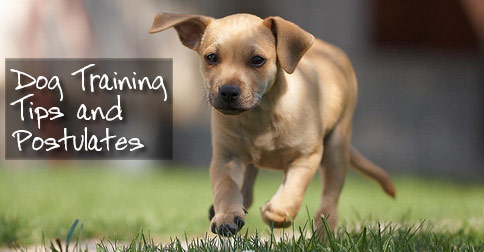 Dog Training Tips and Postulates Photo
