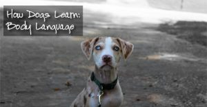 How Dogs Learn: Body Language