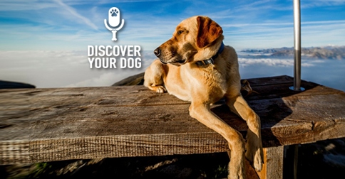 Discover Your Dog - Dog on a Dock Pic