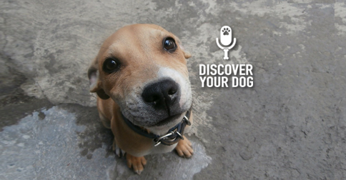 Discover Your Dog - Dog Pic