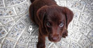 Ep 004 How to Set Dog Training Goals for Maximum Benefit