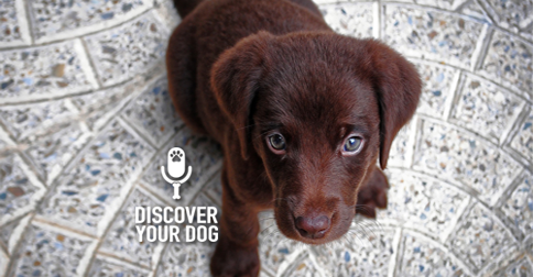 Discover Your Dog - Puppy Pic
