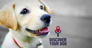 Ep 005 How Dogs Communicate with Us