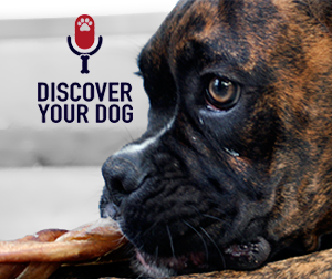 Ep 006 Creating New Habits with Your Dog