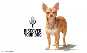 Ep 007 Dealing with Setbacks in Dog Training