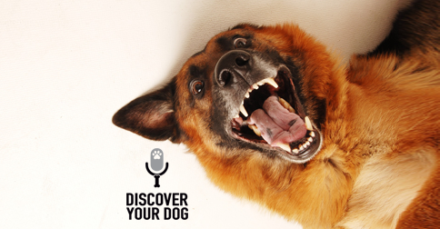 Discover Your Dog - Crazy Dog Pic