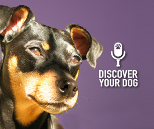 Finding What Motivates Your Dog