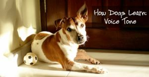 How Dogs Learn: Voice Tone