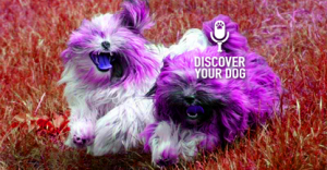 Ep 015 Preparing Your Dog For a Veterinarian Visit