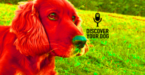 Ep 016 30 Days to an Obedient (or Well-Behaved) Dog