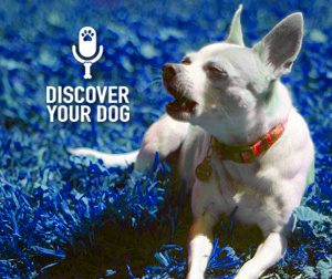 Ep 017 Being Patient With Your Dog Training