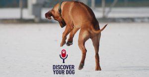 FamilyDogFusion Discover Your Dog Podcast - Ridgeback