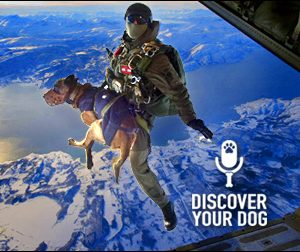 Ep 022 Military Service Dogs