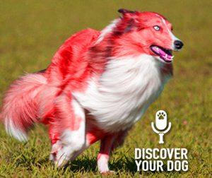 Ep 023 Beware! These Common Household Items Could Be Dangerous to Your Dog