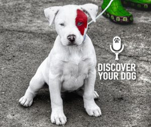 Ep 027 RECOVER Your Dog: How to Keep Your Dog from Staying Lost Forever
