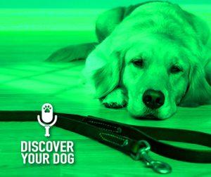 Ep 030 Dog Training Basics: Leash Handling 101