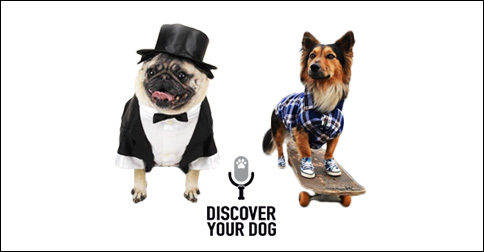 Formal Dog and Casual Dog image