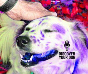 Ep 032 Dog Training Basics: Praise vs. Motivation