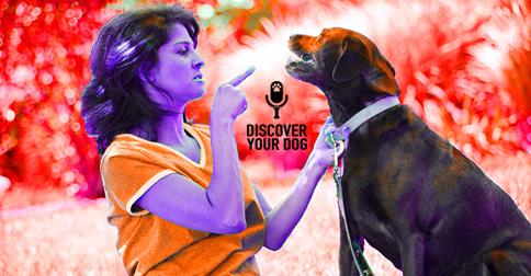 Woman Correcting Dog Image