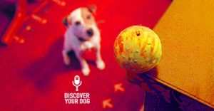 Dog focused on ONE THING. Discover Your Dog image