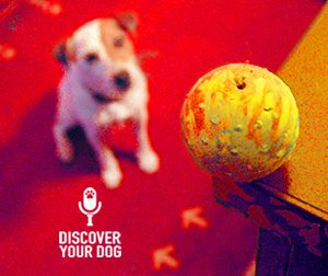 Ep 038 Training Your Dog to Ignore Distractions Outside Your Home