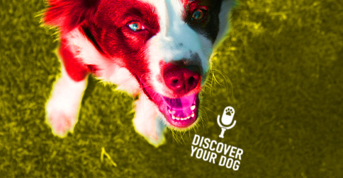 Happy Dog Looking up Image - Discover Your Dog