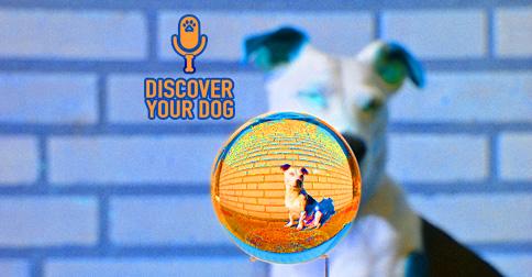 Orange Dog Discover Your Dog image