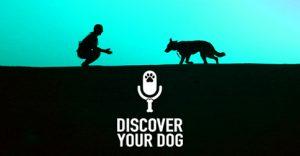 Blue Sky Discover Your Dog