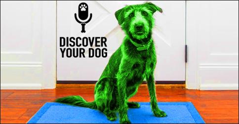 Green Dog - Dog Family Fusion