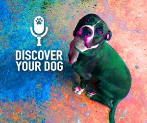 Ep 051 Catch Your Dog Red-Handed…Or Forget It!