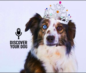Ep 055 The Three Stages to Training Your Dog Off-Leash