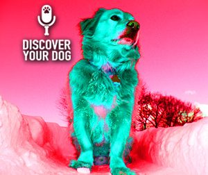 Ep 070 Making the Mental Shift with your Dog Obedience Training