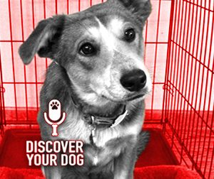 Ep 073 Crate Training Your Dog
