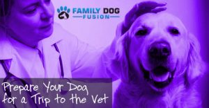 Prepare Your Dog for a Trip to the Vet