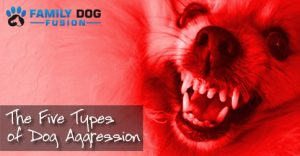 The 5 Types of Dog Aggression