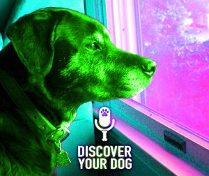 Ep 077 Dog Separation Anxiety and You