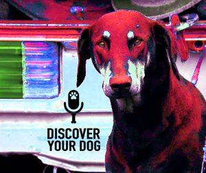 Ep 076 A PrognosisforYourProtective Dog