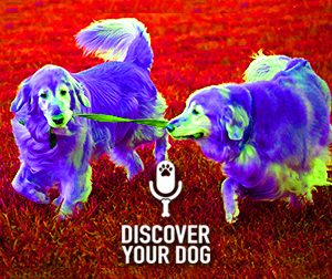 Ep 078 DIY In-Home Dog Training VS Doggie Boot Camp