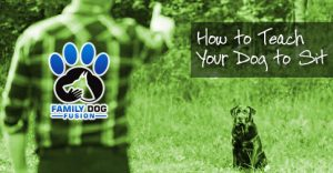 How to Teach a Dog to Sit and Stay in Record Time