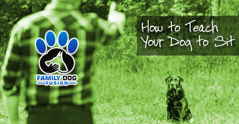 How to Teach Your Dog to Sit image