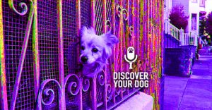 Ep 080 Don't Kill Your Dog: Build a Protective Perimeter