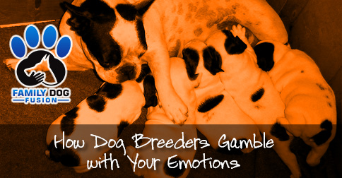 How Dog Breeders Gamble with Your Emotions image