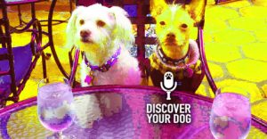 Ep 082 Keep Your Dog From Eating Poop