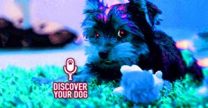 Ep 084 Placating Your Possessive Dog