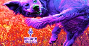 Ep 085 Chasing Tail: Has Your Dog Spun Out of Control?