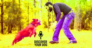 Ep 086 How YOU Communicate with Your Dog!